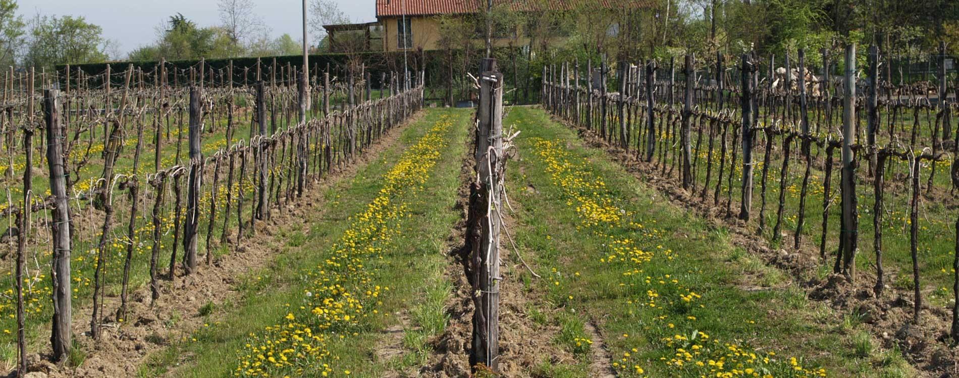 Produzione vini treviso vini di gorgo al monticano - Produzione mobilifici treviso ...